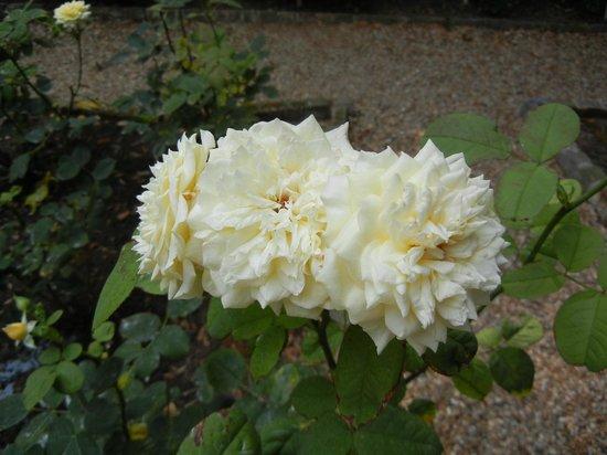 Elizabethan Gardens 사진