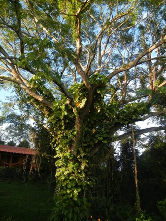 Anamaya Resort & Retreat Center: the tree of life at entry