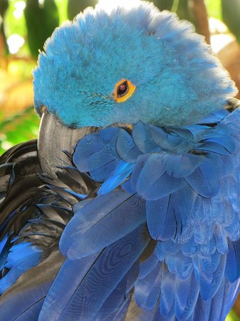 Gulf World Marine Park: I loved the color of this bird.
