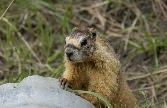 Wildwood Inn: animal found in the Estes Park area