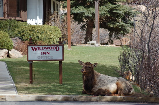 Front lawn of Wildwood Inn office - Elk