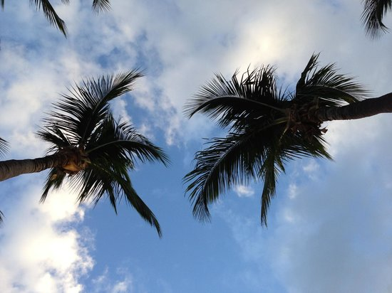 The Reach Key West, A Waldorf Astoria Resort: Looking up through the Palms from a hammock on beach