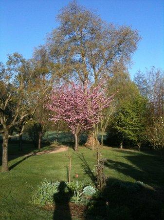 Manoir du Moulin : Looking back towards the park