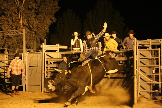 Moonshine Willy's: bull riding