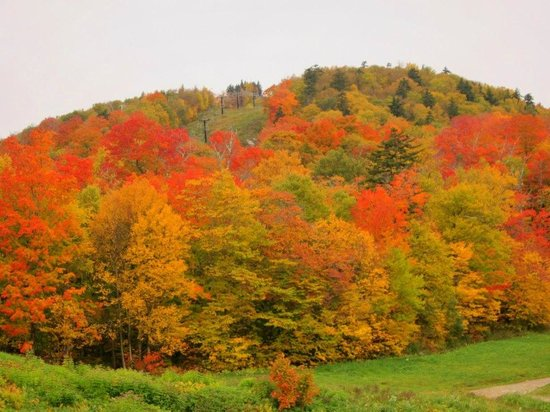 Fall Foliage Killington VT | Killington Mountain Lodge | Local Guide