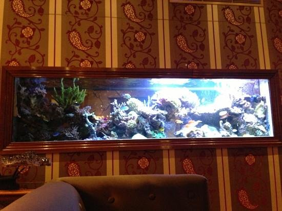 Hotel Estherea : the famous Marine tank at the entrance