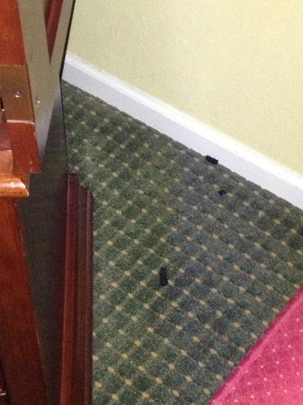 Park Lane Hotel and Suites: Dog poop in plain sight beside the tv
