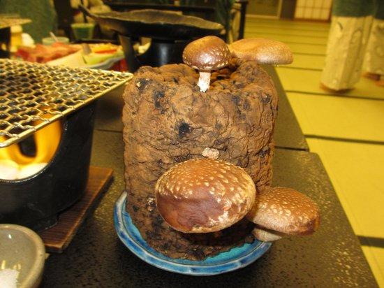 Ryokan Biyunoyado: Fresh mushroom on the bark