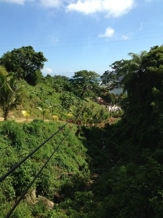 Jungle Top Zipline Adventure: Couldn't believe that they had 18 of these gorgeous lines!!