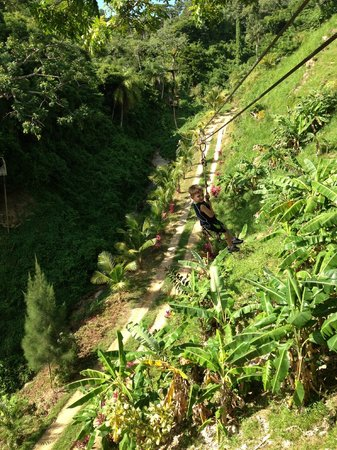 Jungle Top Zipline Adventure: Picture of my son zipping along