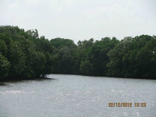 Pichavaram Mangrove Forest : Closer Look