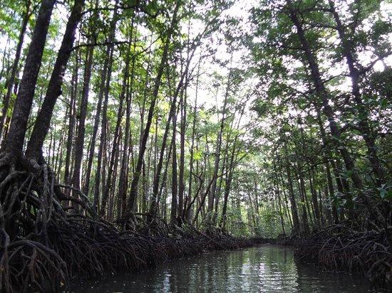 Puerto Princesa Underground River : Mangrove Paddle Boat Tour