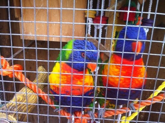 Anndion Lodge, Apartments & Function Centre: the parrots at Anndion