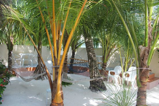 Stingray Beach Inn: Hammocks