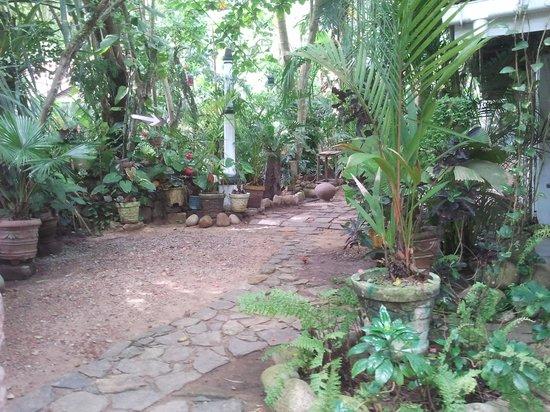 Heaven on Earth Guesthouse: way through garden ( to heaven? )