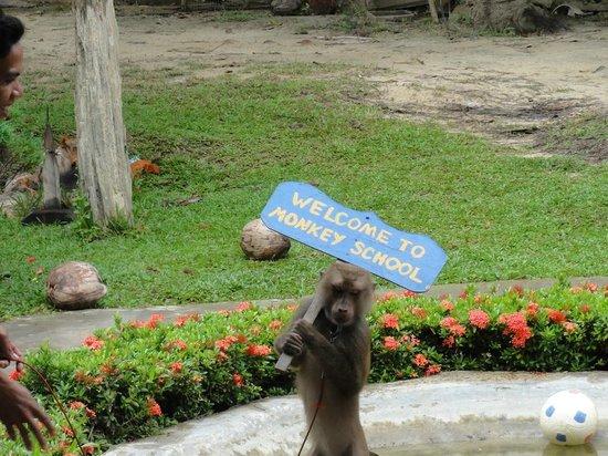 Lanta Monkey School: Apa som hälsar välkommen