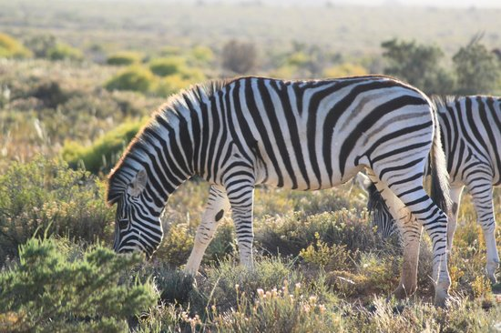 Sanbona Wildlife Reserve: The ultimate bar code