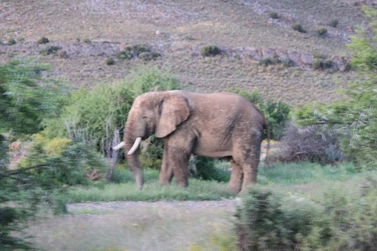 Sanbona Wildlife Reserve - Tilney Manor, Dwyka Tented Lodge, Gondwana Lodge: Elephant at dusk