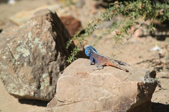 Sanbona Wildlife Reserve: beautiful... both big and small
