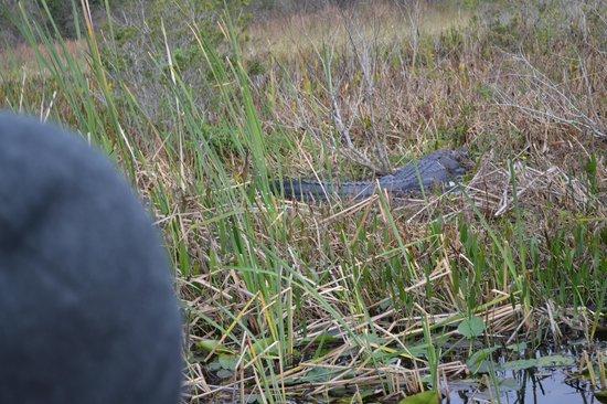 Marsh Landing Adventures: Pappa Alligator