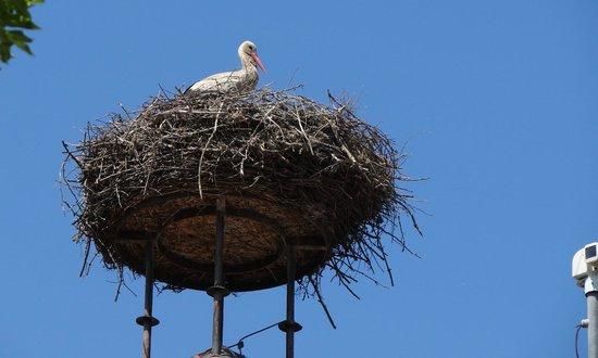 VILA VITA Pannonia: Storch auf dem Dach