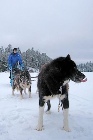 Wintergreen Dogsledding Lodge: Zip sledding