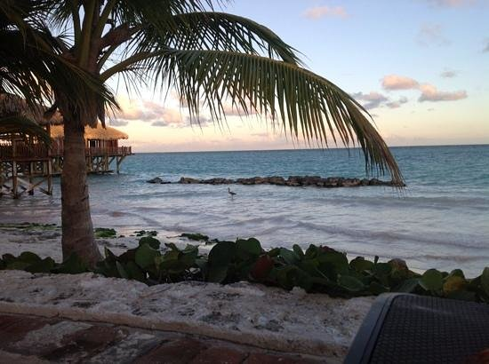 Sanctuary Cap Cana by AlSol : the blue marlin at sunset