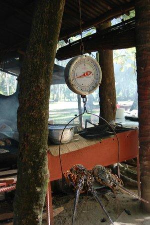 Lagouste et possons grill e vraies frites fraiches for Poisson coye