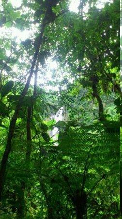 Reserva Natural Salto Morato: Salto Morato (visto da trilha)