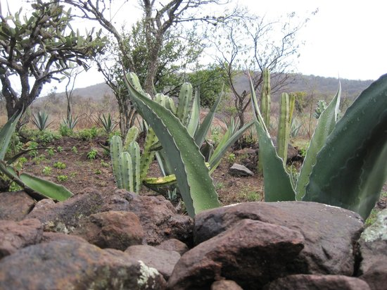 Simple Choice Farm cactus