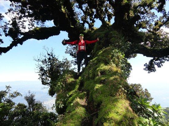 Pacaya Volcano : Arbol en el Cerro Negro
