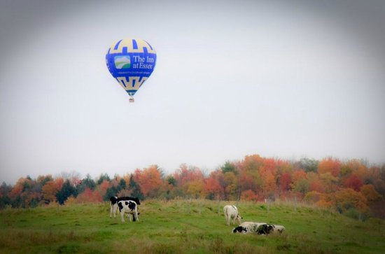 Above Reality Inc. Hot Air Balloon Rides: Cows and Fall colors