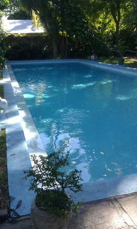 The Ernest Hemingway Home and Museum: The pool the wife spent $20k for, house cost $8k.