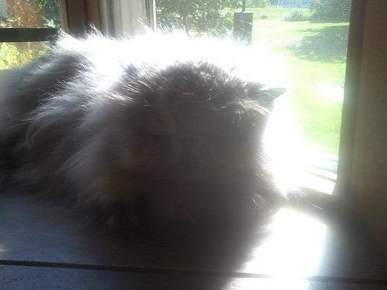 Baird Tavern: Cool cat!