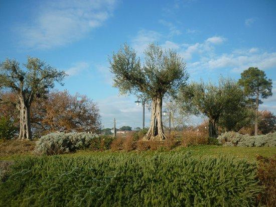 Agriturismo Canalicchio : Ulivi ed erbe officinali nel giardino