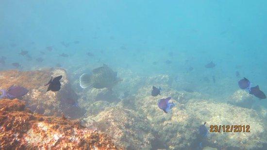Murdeshwar, Indien: marine life