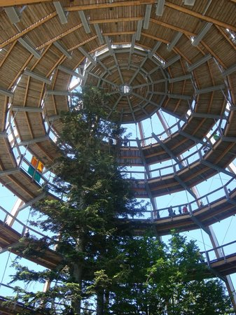 Hotel Gross: The treetop walk