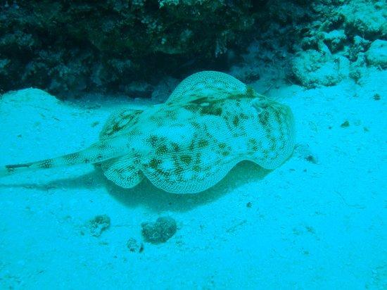 Cancun Diving College : Raia