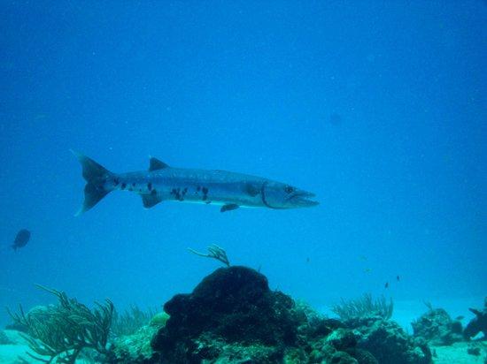 Cancun Diving College : Barracuda