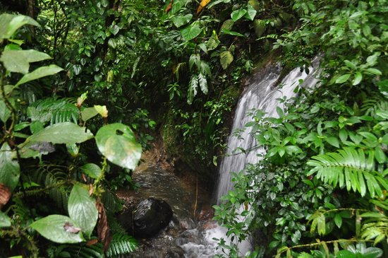 Chachagua Rainforest Eco Lodge: Waterfall hike