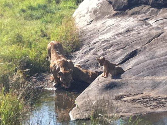 Enkewa Camp: Leones