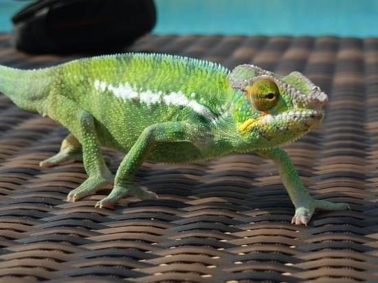 Loharano Hotel: camaleonte del resort