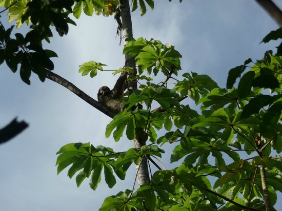 Arenas del Mar Beachfront & Rainforest Resort: sloth in front of reception