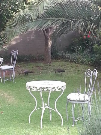Ginnegaap Guesthouse: Front yard area, with fig trees, birds, and dining areas.