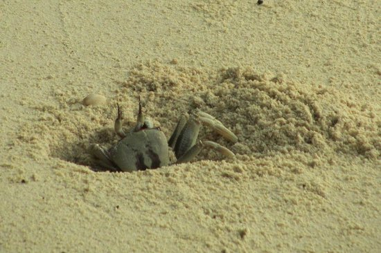 Mu Ko Surin National Park: A ghost crab on the island