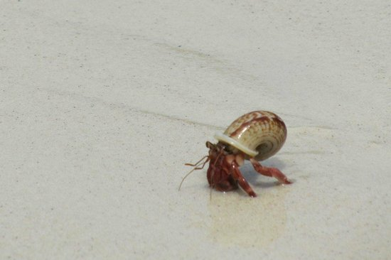 Mu Ko Surin National Park: A hermit crab on the island