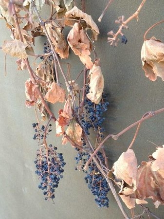 El Cosmico: winter grapes on the side of the outdoor bathroom...