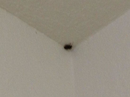 Quality Inn & Suites Biltmore East: Large bug crawling down wall in the bathroom