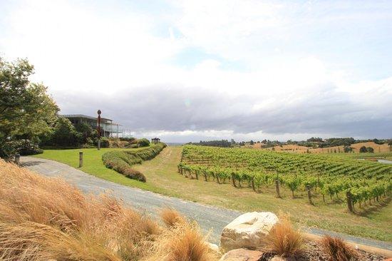 Wine Art and Wilderness : winery