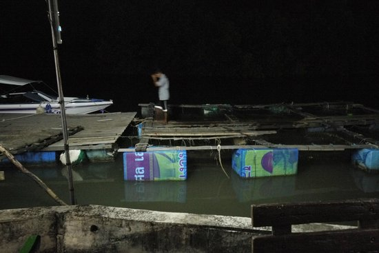 Chaiyo Seafood Restaurant : Fetching fish from the holding tanks